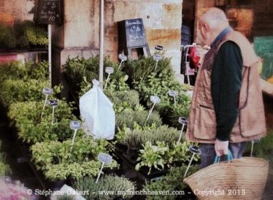 Fresh herbs to plant