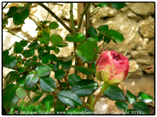 P1060021 _Snapseed
