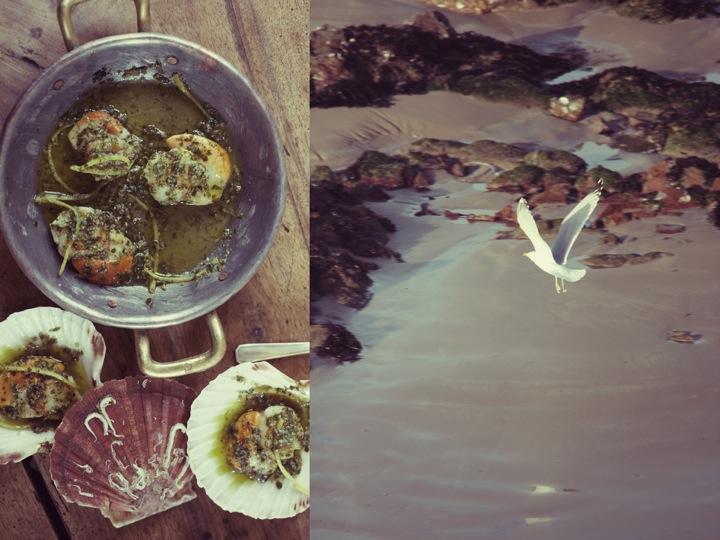 Scallops, seafood, scallop recipe