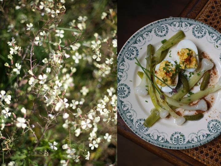 Wild leeks - Mimosa eggs