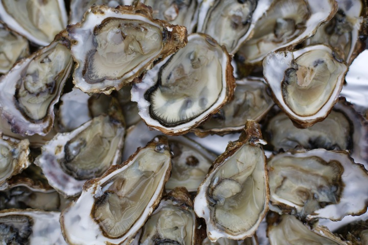 Oysters from île d'Oleron