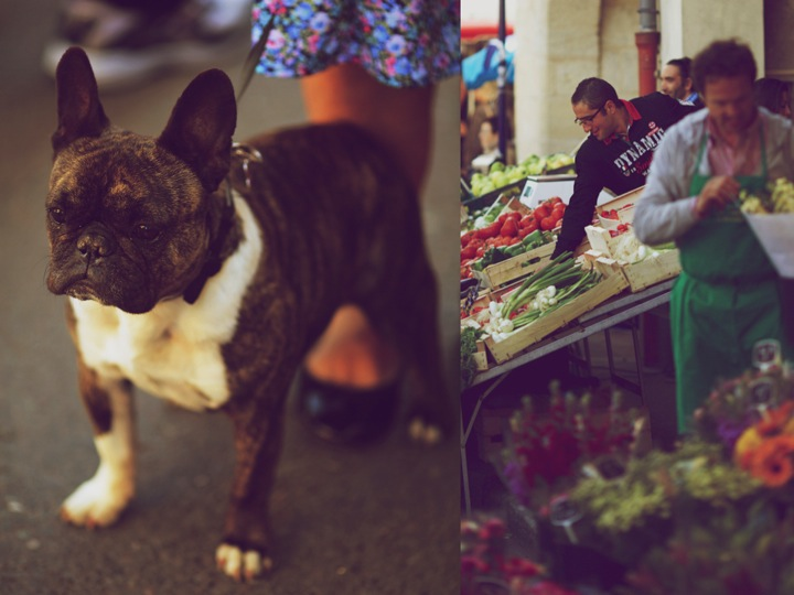 Dog at market