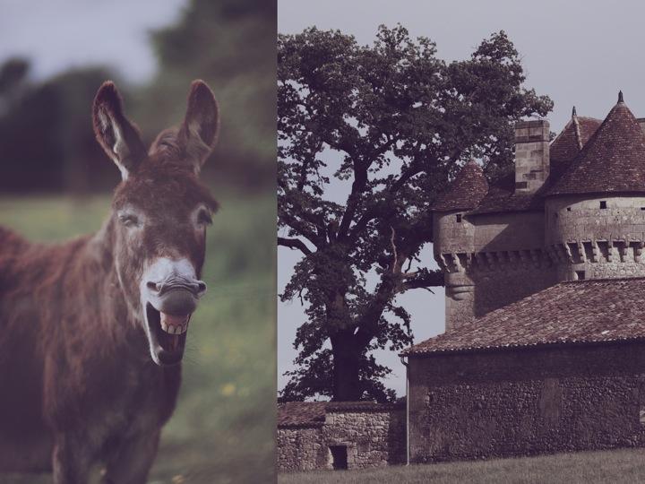 Donkey castle