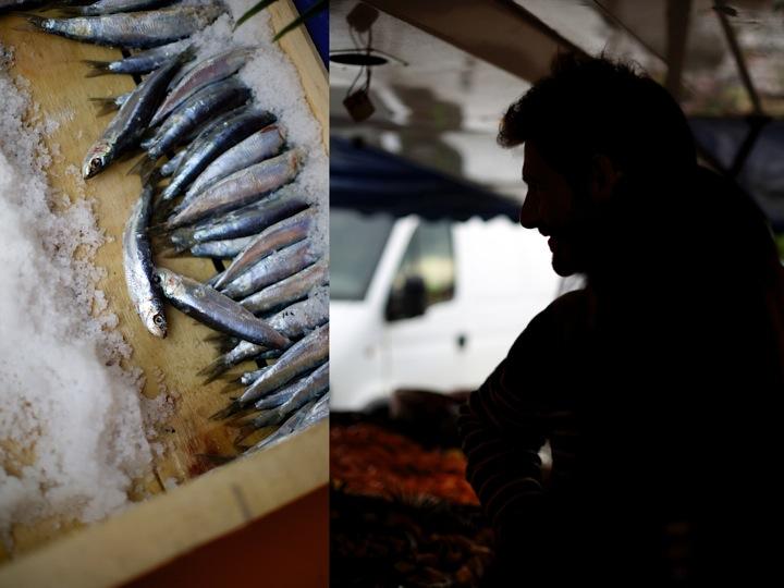 sardines - Charlie
