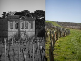 French-vineyard-bordeaux